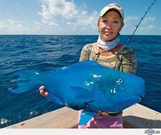 The Blue Parrotfish (le poisson perroquet bleu) Bizarre Animals, Unusual Animals, Rare Animals, Animals And Pets, Ugly Animals, Dangerous Animals, Animals Amazing, Weird Creatures, Sea Creatures