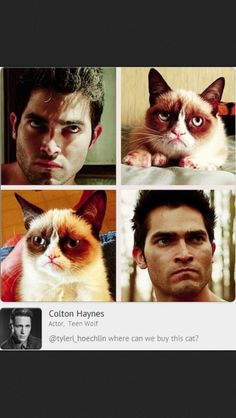 Derek Hale = Grumpy Cat <<< OMG Then I'm not the only one who thinks this!!!!