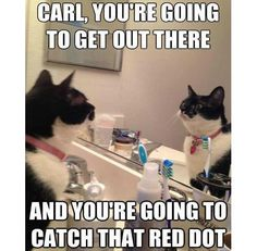 Carl, you're going to get out there and you're going to catch the red dot.