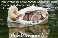 Animals And Pets, Funny Animals, Cute Animals, Wild Animals, Animals Images, Farm Animals, Beautiful Birds, Animals Beautiful, Beautiful Swan