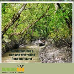 #Sunderban has a #rich and diversified #flora and #fauna. Suraj Das Mob :- 9932780889. visit: http://www.sundarbannaturetour.com