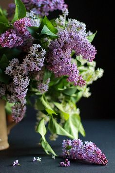 Reminds me of my Dad!! He loved Lilacs !!