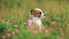Webshots - A Pup in Spring