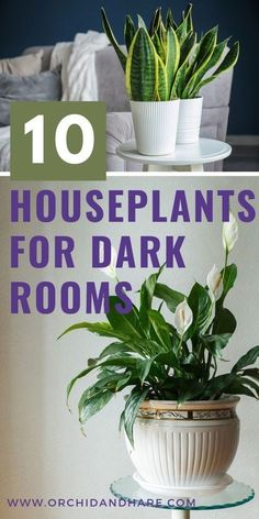 10 Low Light House Plants | Indoor Plants That Grow Without Sunlight | 1000 - Modern#grow #house #indoor #light #modern #plants #sunlight Common House Plants, Easy House Plants, House Plants Decor, Indoor House Plants, Indoor Plants Low Light, Best Indoor Plants, Low Light Houseplants, Best Plants For Home, Best Office Plants