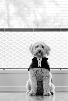 I want my puppy to come to my wedding! This would be way too adorable!