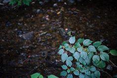 Leaves beside river