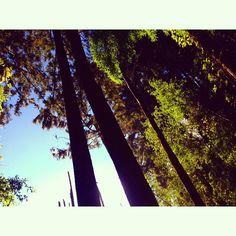 allisonku's photo on Instagram
