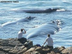 Whale Watching Hotspot - Hermanus, South Africa