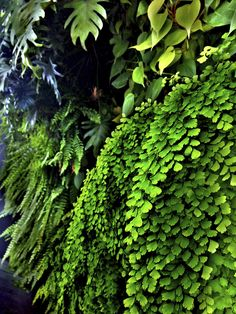 FERNS IN VERTICAL GARDEN