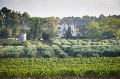 Château Canet – Vineyard holidays for the whole family – Carcassonne