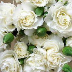 white mini carnation - Google Search