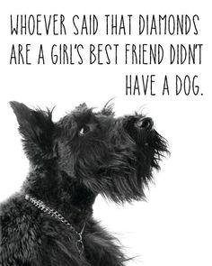 Girl's best friend... #yuki #yukituristainsolita #dog #scottishterrier #wheatscottie #cachorro #cachorroetudodebom #pet #pets #petsofinstagram #petsgram #instapuppy #cute #instacute #instapet #puppylove #puppygram #scotties #terrier #scottishterriersofinstagram #puppiesofinstagram #scottielove #scottielove #scottish_terrier #scottielovers #scottieobsessed #scottiegram #scottishterribles #themostbeautifuldogintheworld