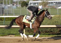Palace Malice - winner of the Belmont today