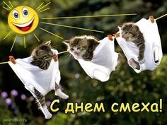 Man Humor, Poems, Bird, Cats, Funny, Animals, Android, Holidays, Smile