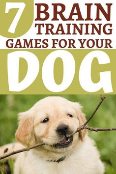 Brain-Boosting Exercises To Stimulate Your Dog's Mental Performance – Dogs N' Stuff Big Dog Little Dog, Big Dogs, Puppy Training Tips, Training Your Dog, Dog Grooming Shop, Puppies Tips, Dog Rules, Dog Hacks, Dog Behavior