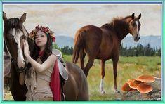 Horses, Animals, Animales, Animaux, Animal, Animais, Horse