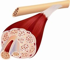 Myofascial Pain Syndrome (muscle pain)