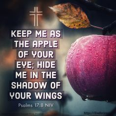 Keep me as the apple of your eye. Keep me as the apple of your eye; hide me in the shadow of your wings Psalms NIV Powerful Bible Verses, Best Bible Verses, Bible Verses About Faith, Bible Verses Quotes, Bible Scriptures, Psalm 17, Angel Protection, Big Words, Saint Quotes