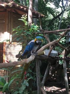 San Gil San Gil, Parrot, Birds, Nature, Animals, Natural Playgrounds, Colombia, Animales, Animaux