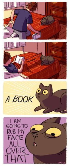 A BOOK!...this is soooo my cat when I start to read.