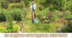 «Солим» лук или 10 садово-огородных секретов;) | 6 соток