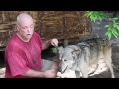 Tucked away in the Naples Estates is a special place that many don't know exists, Shy Wolf Sanctuary Education & Experience Center. This magical place is a sanctuary for rescued exotic pets. http://youtu.be/FIvPvCVBUAc