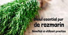 Uleiul esential de rozmarin: beneficii si utilizari practice Medicine Notes, Herbs, Herb, Spice