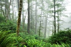Save the Elliot Forest - Mountain Rose Herbs