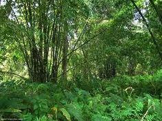 El Bosque Molai