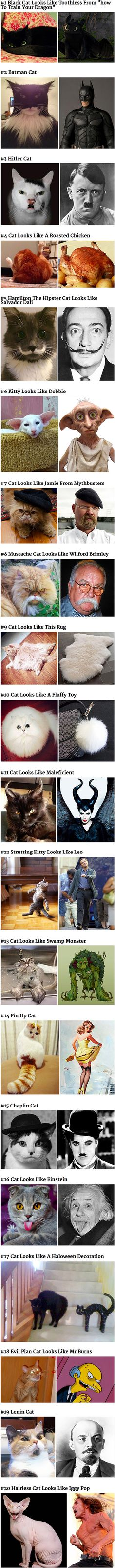 Here is a list of cats that got bored of looking like cats and decided to look like something else instead. Cats are the biggest divas on the internet, so there is no way we have got all the shape-shifting felines in the world in this list.