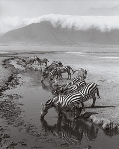 Zebras, Ngorongoro Crater, Tanzania, by Cathrine Wessel