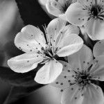 flower photography, macro flower photography, black and white flower photography, flower photography tips, close up flower photography, flower photography techniques, white flower photography, digital flower photography