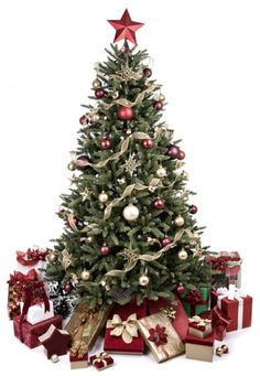 christmas tree care tips - Best Live Christmas Trees