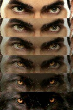Olhar de um predador Derek Stiles, Teen Wolf Derek Hale, Teen Wolf Scott, Sterek, Flash And Arrow, Teen Wolf Ships, Teen Wolf Quotes, Supergirl, Tyler Posey