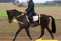 Evention TV: Understanding 'on the bit' « HORSE NATION