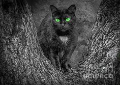 Black Cat Marion Johnson