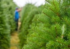 Working at the Tree Farm. Having Oleg cutting the tree blurred out & vice versus