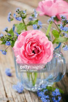 Stock Photo : Mixed floral arrangement of pink ranunculus (Ranunculus) and forget-me-not (Myosotis)