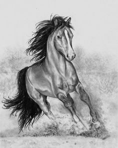 Best 11 Pencil drawing I did for a friend of mine. HB, and blending stumps. Pencil Sketches Of Faces, Pencil Art Drawings, Cool Art Drawings, Drawing Sketches, Horse Pencil Drawing, Horse Drawings, Animal Drawings, All Animals Photos, Poppy Drawing