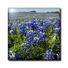 """Bluebonnets, Freyburg, Texas - US44 FVI0007 - Franklin Viola - 12 Inch Ceramic Tile by 3dRose. $22.99. Dimensions: 12"""" H x 12"""" W x 1/4"""" D. Image applied to the top surface. Clean with mild detergent. High gloss finish. Construction grade. Floor installation not recommended.. Bluebonnets, Freyburg, Texas - US44 FVI0007 - Franklin Viola Tile is great for a backsplash, countertop or as an accent. This commercial quality construction grade tile has a high gloss finish. The image is ..."""