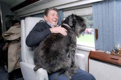 "President Ronald Reagan and his Bouvier des Flandres ""Lucky."""