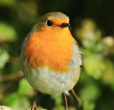 Robin simply the best!