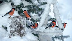http://ift.tt/1ZY8ZTJ #Nature breathtaking #Photos Red Frost by JrnAllanPedersen http://ift.tt/1QRIS9y