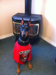 Thanks to Twitter follower @daw_11 for sharing this dog's #Sens pride. #hockeypets