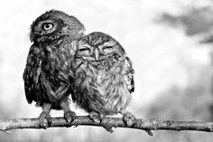 Black and White Bird Photography | ... with 15 notes tagged as owl owls birds black and white photography
