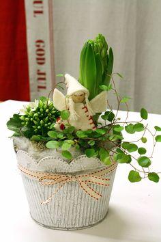 http://holmsundsblommor.blogspot.se/2011/12/liten-julgrupp-i-vitt-och-rott.html Liten julgrupp med kalanchoe, plättar i luften, hyacint och ängel
