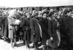 Auschwitz, to the women's camp - from the Auschwitz Album