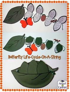 Butterfly Life Cycle on a String: A fun way to get students writing about science! 1st Grade Science, Kindergarten Science, Science Classroom, Teaching Science, Science Activities, Writing Activities, Science Ideas, Teaching Ideas, Science Fun