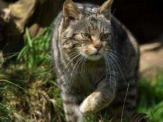 Bilim dünyası açıkladı: Evcil kedilerin ataları bizleri seçti, biz onları değil! Detaylar ajanimo.com'da.. #ajanimo #ajanbrian #cat #kedi #amazing #science #bilim #cats #photography #cute #pets  #pet