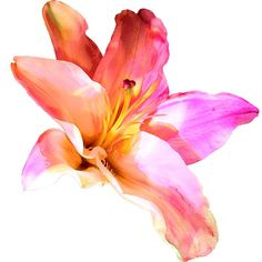 Original art for sale at UGallery.com | Lily Sherbet by Michele Valdez | $25 | photography | 20' h x 20' w | http://www.ugallery.com/photogr...
